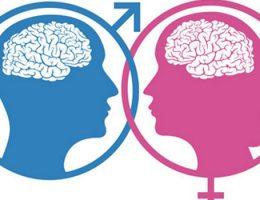 Descubra a diferença entre o cérebro masculino e o feminino